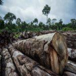 Desmatamento na Amazônia em março cresceu 279% em comparação a 2019