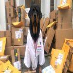 Esta terapia 'Dogtor' está entregando milhares de 'kits de cura para heróis' a trabalhadores de hospitais nas linhas de frente