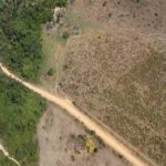 Desmatamento da Amazônia é 171% maior que o registrado em abril de 2019