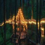Essa floresta na Indonésia tem algo que parece mágica