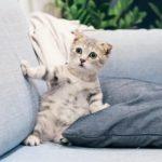 Por que os gatos gostam de 'amassar pãozinho' com as patas?