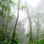 É possível produzir sem desmatar a amazônia?