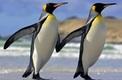 10 Curiosidades Sobre Pinguins